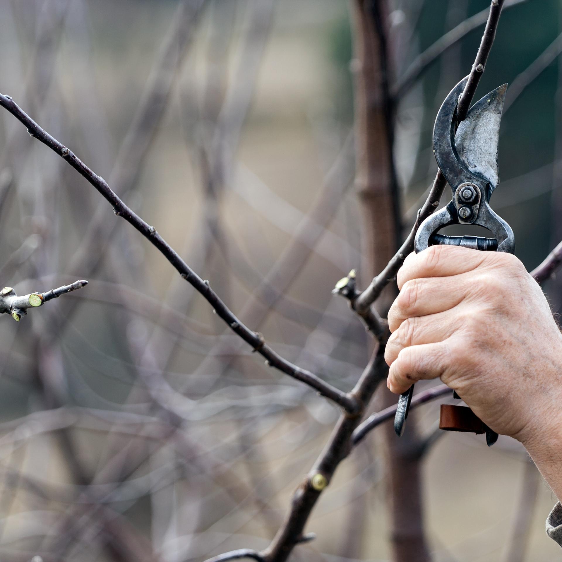 Jak si poradit s prořezáním stromů a keřů na podzim? Tři chyby, na které si dát pozor