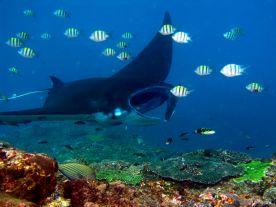 Záhadný život v oceánech